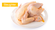 Poultry Slaughter Production Li