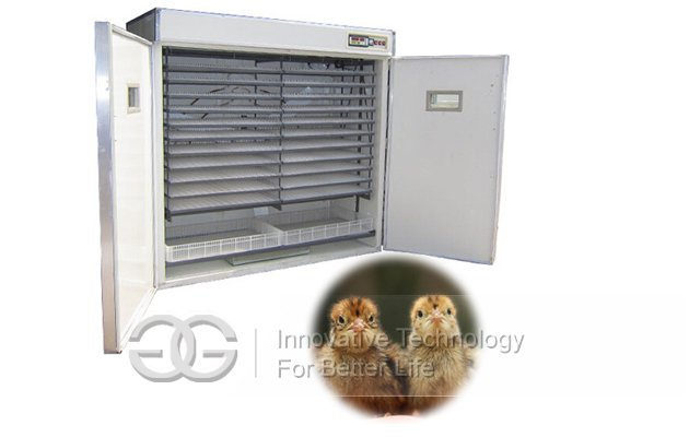 Factory Supply Good Quail Egg Incubator