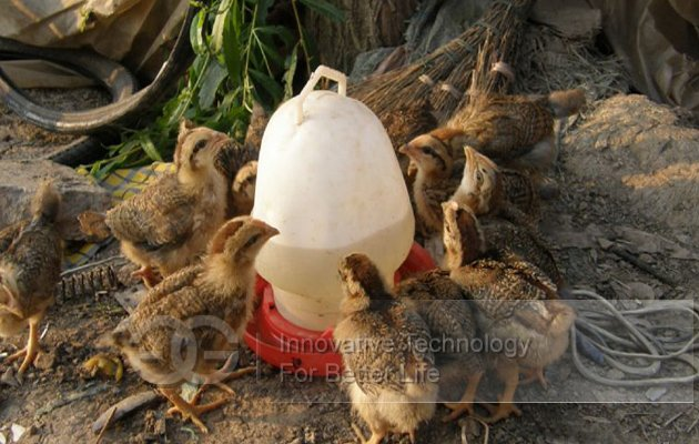 Different Capacity Poultry Chicken Drinker