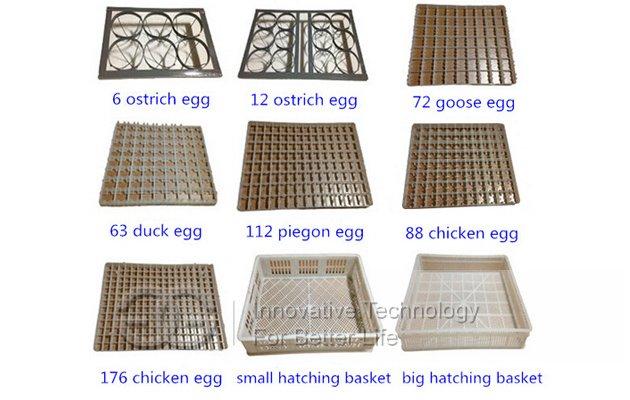 Quail Eggs Incubator Equipement