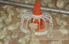 High Quality Chicken House Feeding System