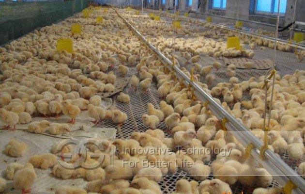 High Quality Chicken House Feeding System