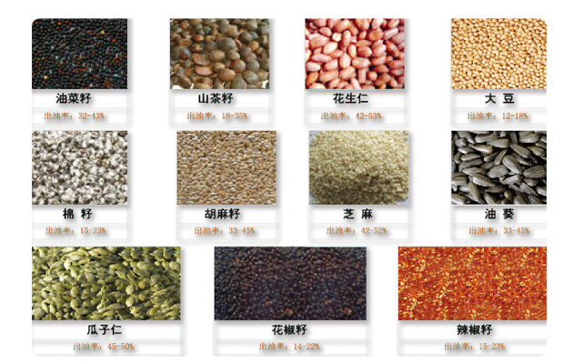 Automatic Sesame Oil Extraction Machine|Sesame Oil Pressing Machine