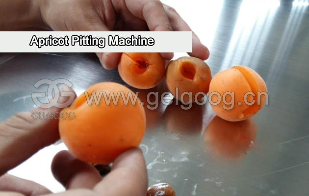 Apricot Pitting Machine|Cherry Pit Removal Machine