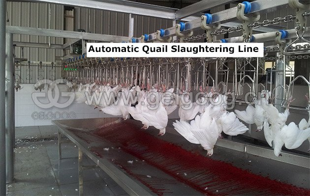 Automatic Quail Slaughtering Line