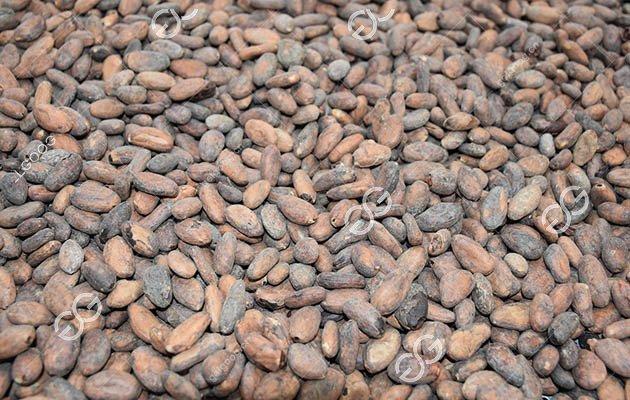 Automatic Gas Cocoa Bean Roasting Machine for Cocoa Powder